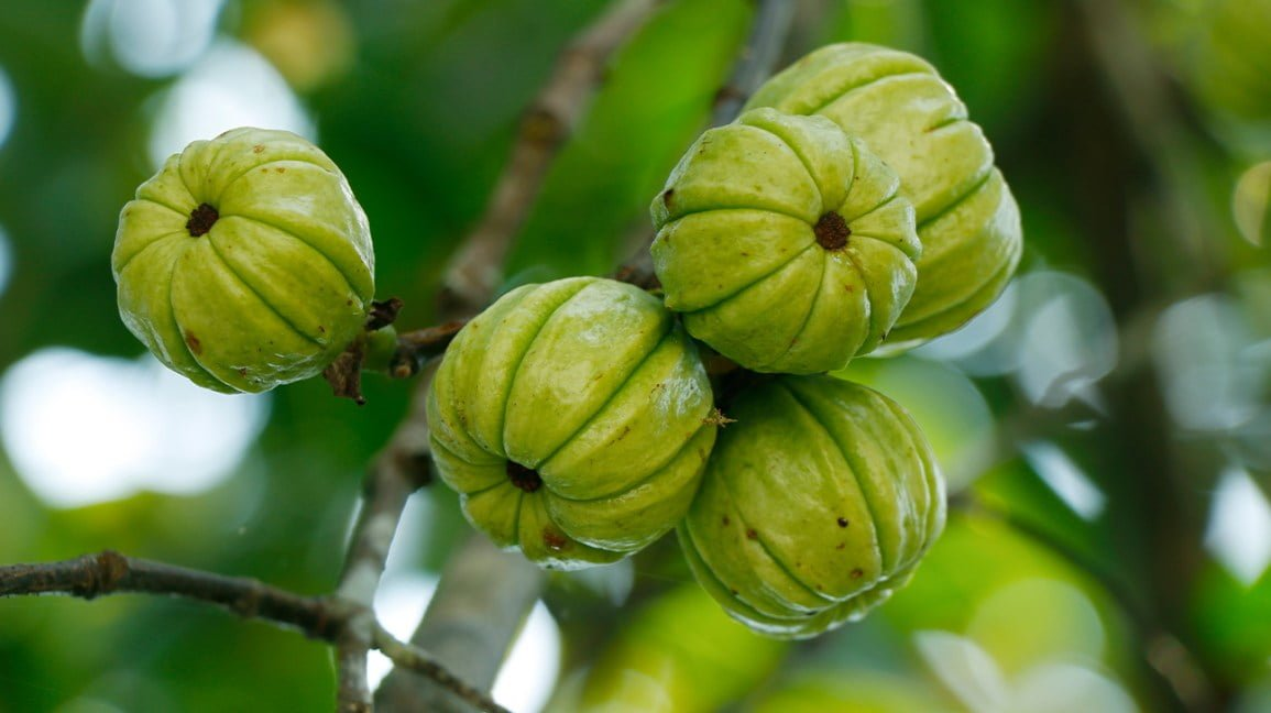 Appetite Suppressant For Weight Loss: Garcinia Cambogia